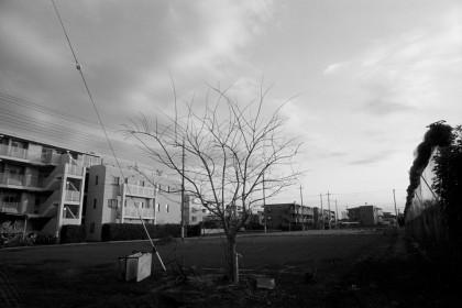 作品201424