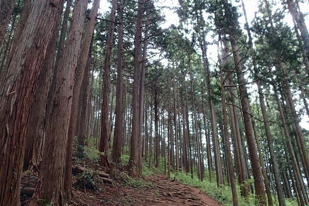 大塚山への登り