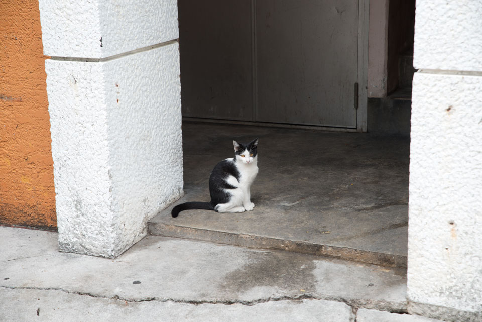 美崎町の猫