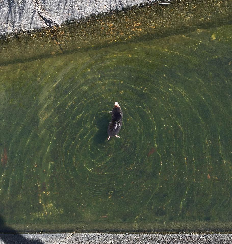 溺れそうなモグラ