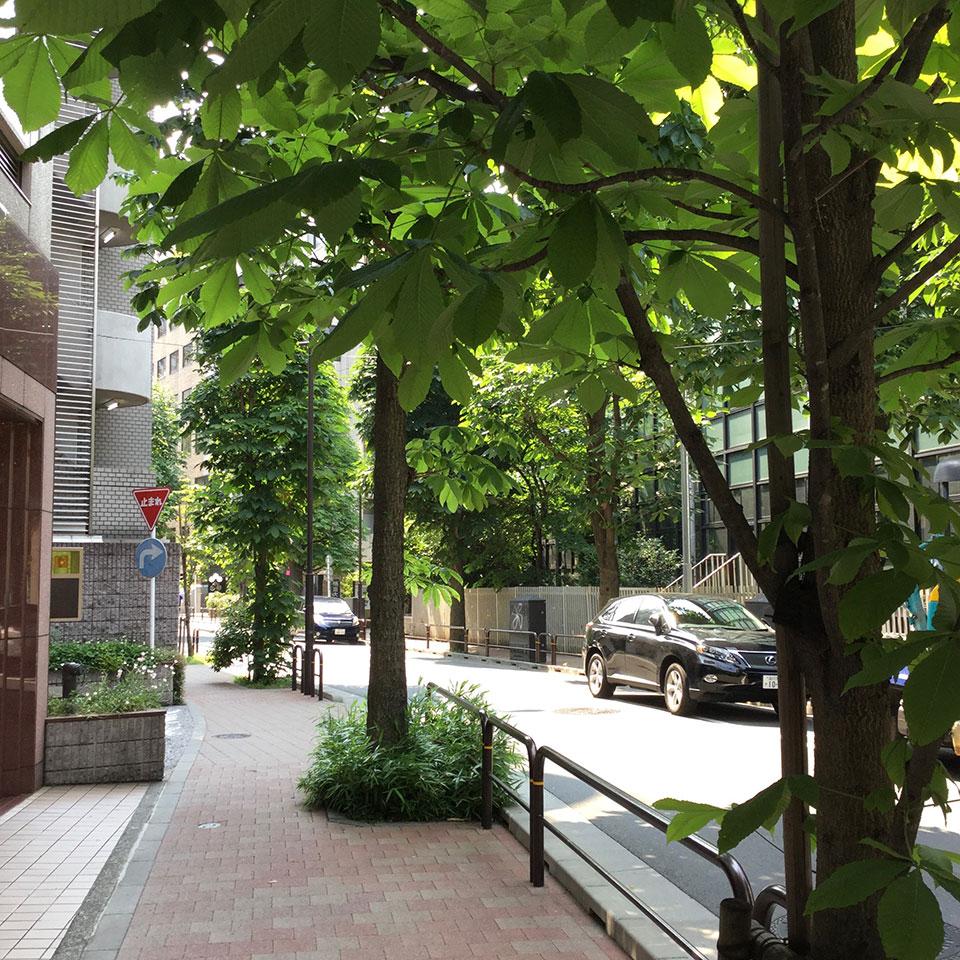 窓の外 街路樹が美しい
