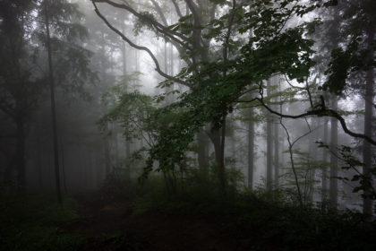 まっくら森