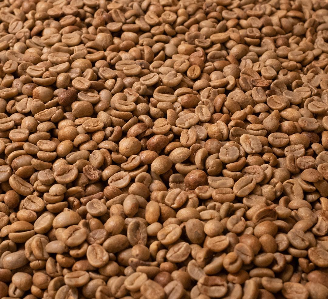 生豆の豆面